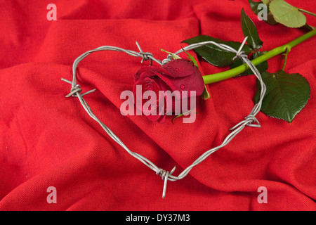 Barbed wire heart-shaped and rose on red background - Stock Photo