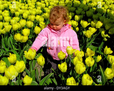 Spring time in The Netherlands: A little girl is standing in a bulb field  between yellow tulips. - Stock Photo
