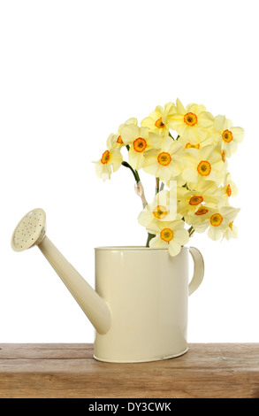 Daffodil arrangement in a cream colored watering can on a wooden board against a white background - Stock Photo