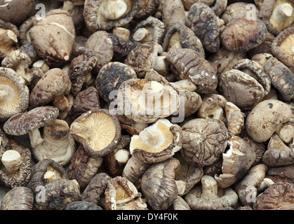 Dried Shiitake Mushrooms - Stock Photo