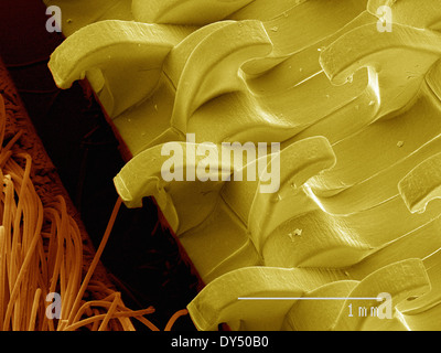 Coloured SEM of hook and loop fabric - Stock Photo