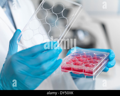 Stem cell research. Close up of female scientist examining cell cultures in multiwell tray - Stock Photo