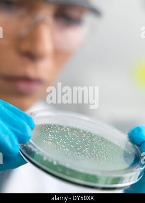 Close up of female scientist examining micro organisms in petri dish - Stock Photo