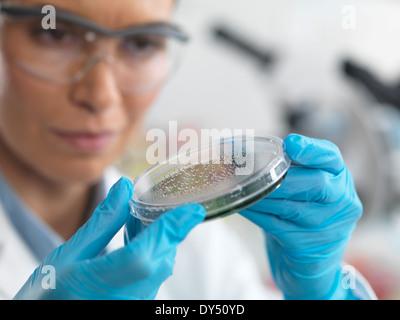 Female scientist examining micro organisms in petri dish - Stock Photo