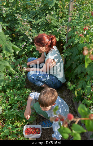 Mother and son berry-picking - Stock Photo