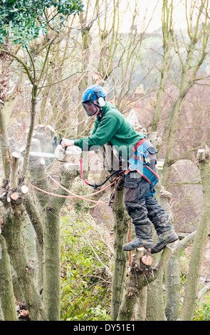 Tree surgeon working up a tree using chainsaw - Stock Photo