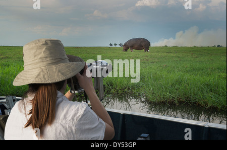 Woman photographing Hippopotamus from safari truck, Kasane, Chobe National Park, Botswana, Africa - Stock Photo