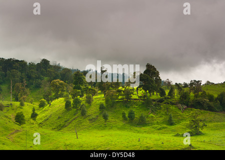 Green fields and forested hillsides at the border of Volcan Baru national park, just outside Cerro Punta in the - Stock Photo