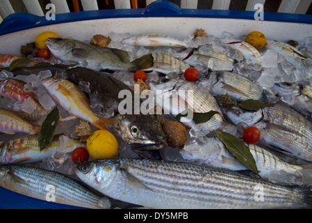 fishes on ice with vegetabels in a little boat - Stock Photo