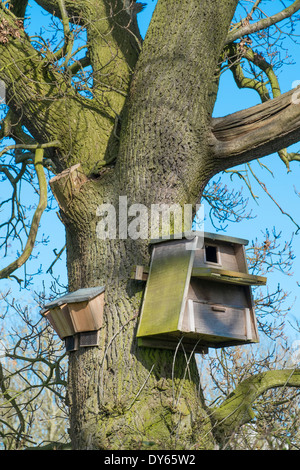 Barn Owl nest box and Bat boxes attached to Oak tree Stock ...