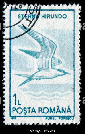 ROMANIA - CIRCA 1991: A stamp printed in the Romania, shows the Common Tern (Sterna hirundo), circa 1991 - Stock Photo
