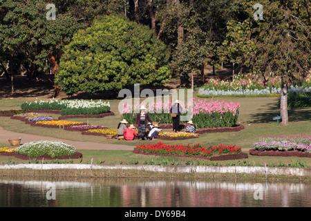 Women doing the gardening in the National Kandawgyi Botanical Gardens in Pyin U Lwin, Myanmar - Stock Photo