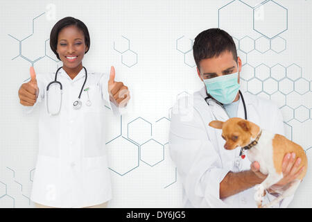 Composite image of vet holding chihuahua and nurse showing thumbs up - Stock Photo