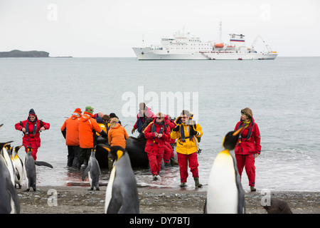 King Penguins on Salisbury Plain, South Georgia, with passengers from an expedition cruise. - Stock Photo