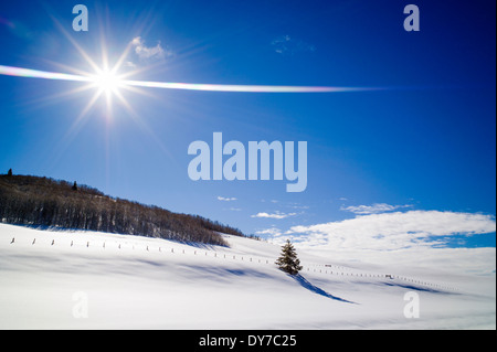Lone tree casts long shadow on the snow, Bridger Wilderness, Wind River Range of mountains, Wyoming, USA - Stock Photo