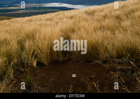 Small stone on soil next to field grass along the trail of the Tongariro Alpine Crossing, New Zealand. - Stock Photo