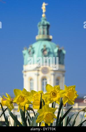 Berlin, Germany. 29th Mar, 2014. Daffodils blossom in the park in front of Charlottenburg Palace in Berlin, Germany, - Stock Photo