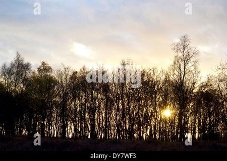 Bunch of trees in Rheden, De Posbank, Netherlands. - Stock Photo