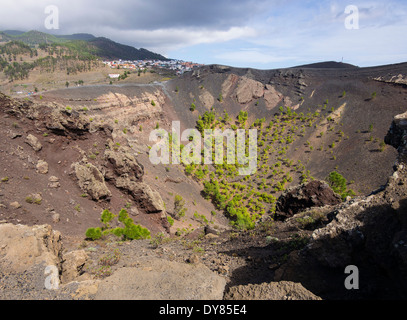 Pine trees grow in the crater of the volcano San Antonio close to the town of Los Canarios on the Canary Island - Stock Photo