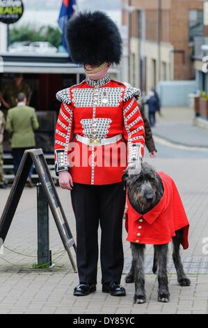 Holywood, Northern Ireland. 9 Apr 2014 - Domhnall (pronounced 'Donal'), the Irish Guards' 16th Regimental Mascot - Stock Photo