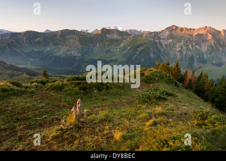 Alps view tree stump mountain Brienzer Rothorn Entlebuch view spruce High Gumme canton Lucerne scenery landscape - Stock Photo