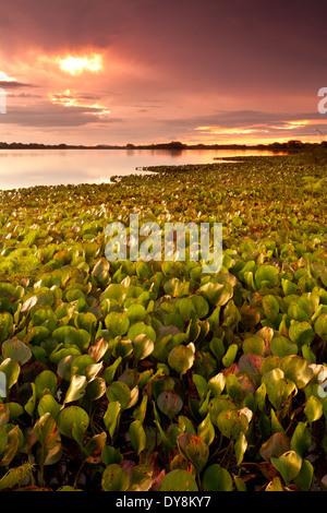 Colorful skies at sunset at Refugio de vida Silvestre Cienaga las Macanas, Herrera province, Republic of Panama.