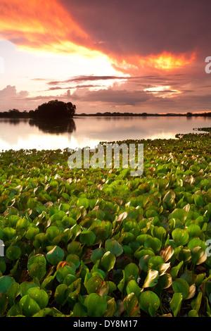 Colorful skies at sunset at Refugio de vida Silvestre Cienaga las Macanas, Herrera province, Republic of Panama. - Stock Photo