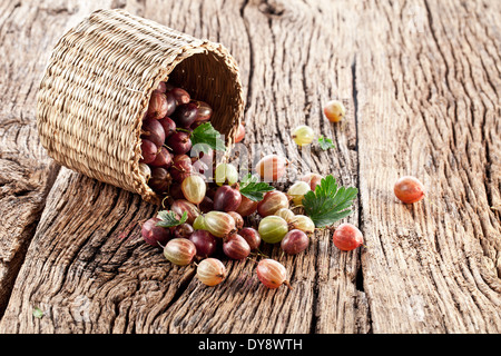 Gooseberries have dropped from the basket on an old wooden table. Stock Photo