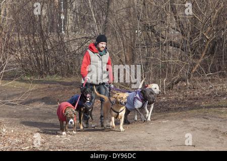 Professional dog walker in Prospect Park, Brooklyn, New York. - Stock Photo
