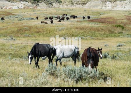 Bison buffalo wild horses Theodore Roosevelt National Park North Dakota USA United States America horse wild prairie - Stock Photo