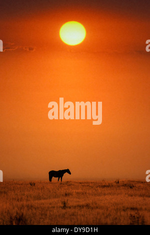 Horse, horses, Grand Teton, National Park, Wyoming, USA, United States, America, free, animal, landscape, prairie, - Stock Photo