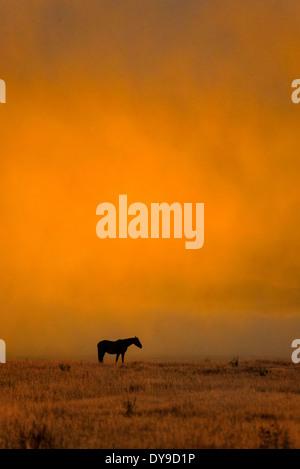 Horse, horses, Grand Teton, National Park, Wyoming, USA, United States, America, free, animal, landscape, prairie, - Stock Photo