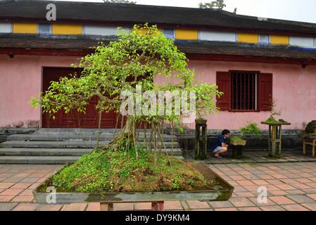 Vietnamese man studying a Chinese Bonsai tree or Chinese penjing growing in Inner courtyard Thien Mu Pagoda,Hue, - Stock Photo