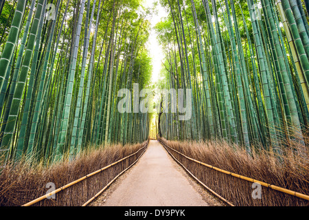 Bamboo forest of Kyoto, Japan. - Stock Photo