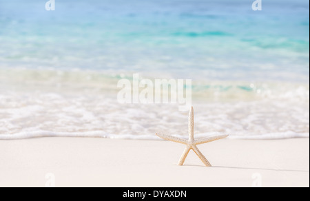 Beautiful beach background, postcard with image of sea star on clear white sandy coastline, day spa, luxury summer - Stock Photo