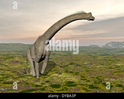 Brachiosaurus dinosaur walking in grassy landscape. - Stock Photo
