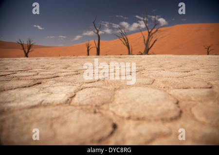 cracks and patterns in the dry surface and dead trees at Deadvlei , Namib Naukluft Park, Namibia, Africa - Stock Photo