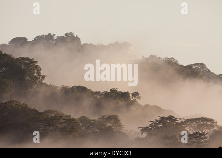 Misty rain forest at dawn in Soberania National Park, Republic of Panama. - Stock Photo