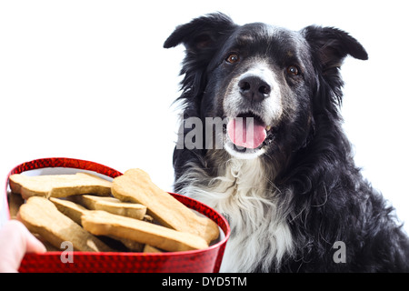 A hand holds a heart shaped box of treats outstretched towards a cute happy dog. isolated on white. - Stock Photo