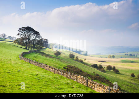 Autumn mists on rolling Derbyshire countryside near Bakewell. - Stock Photo