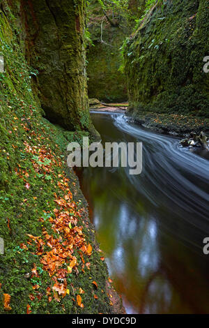 The Devils Pulpit gorge in Finnich Glen. - Stock Photo