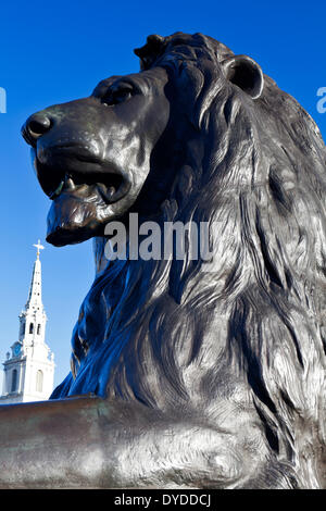 Lion statue and St Martin in the Fields church spire. - Stock Photo