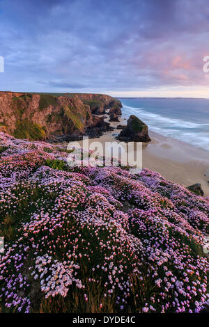 Sunset from the cliff top at Bedruthan Steps in Cornwall with thrift in the foreground. - Stock Photo