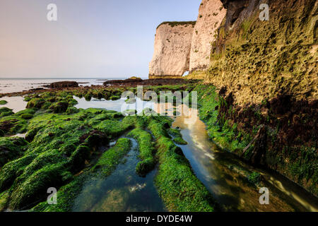 The bottom of the cliffs at Handfast Point on a very low tide. - Stock Photo
