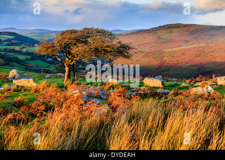 Evening light at Combestone Tor on Dartmoor. - Stock Photo