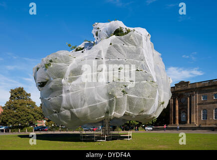 Large tree covered in horticultural fleece to protect it. - Stock Photo