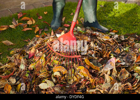 Collecting fallen leaves in autumn. - Stock Photo