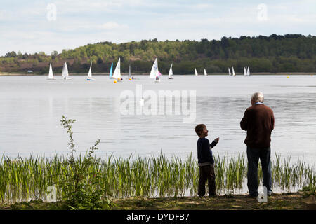 Grandfather and grandson feeding ducks at Frensham Pond with sail boats on lake. - Stock Photo