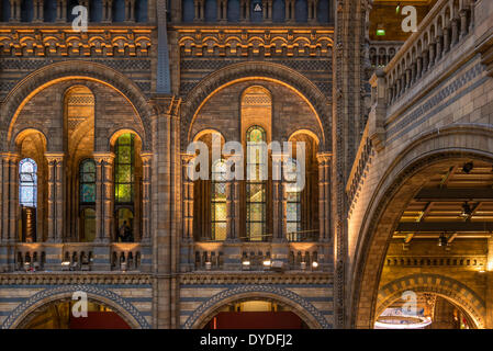 Interior of Natural History Museum in London. - Stock Photo