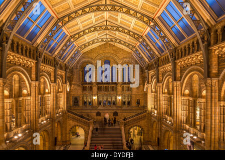 The Central Hall in Natural History Museum in London. - Stock Photo